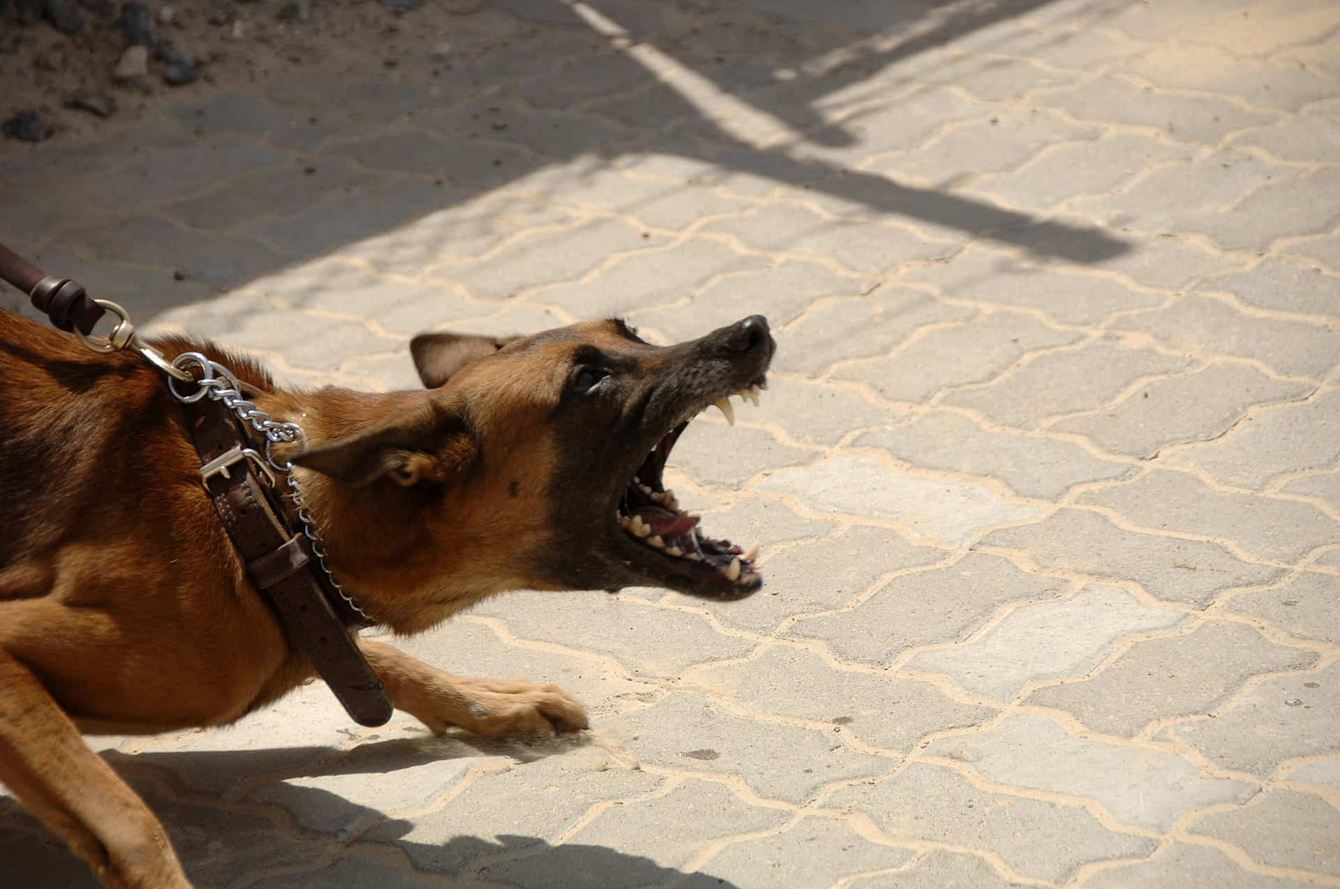 Dog-Bite-Skin-Blood-Personal-Injury-Attorney-Scar-Pain-Pitbull-German-Sheppard-Pit-Doberman-Agressive-No-Leash-Collar-Face-Scarring-Pain-Sue-Money-Court